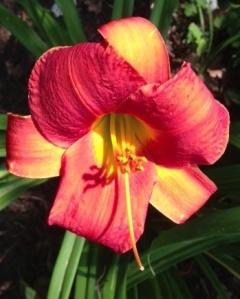 Day Lily, Carondelet Pottery